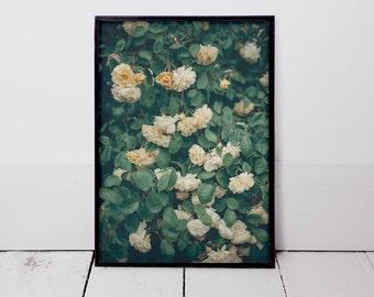 In Full Bloom #2 - Art Print