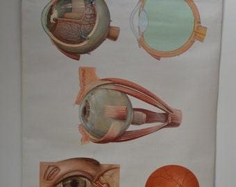 Deutsches Hygiene Museum Anatomical Eye Poster