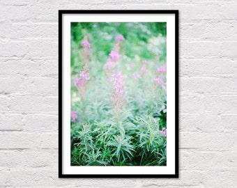 Purple Flower Poster, Purple Flowers Print, Purple Art Print, Printable Art, Wildflower Print, Spring Decor, Girl Wall Art, Digital Download