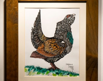 Capercaillie Original Framed Drawing - Ink And Watercolour
