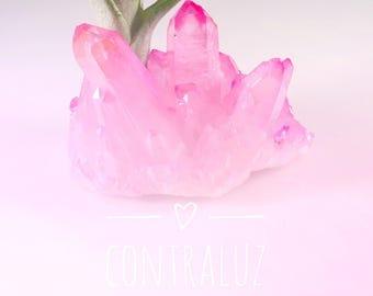 Bubblegum Pink Crystal Air Plant Garden