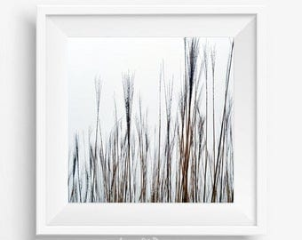 Minimalistic picture to living room Nature photography PRINTABLE art white and brown Beach grass wall decor Rustic wall art white Bedroom
