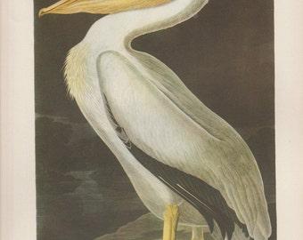 """1937 Vintage Audubon Birds #311 """"White Pelican"""" Full Color Art Plate Lithograph"""