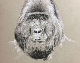 Gorilla Ebony and white pencil drawing