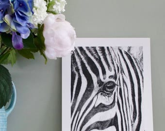 Zebra pencil art giclee print