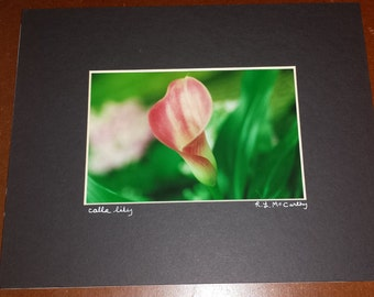 200 8x10 Matted Calla Lily Signed Photography Photograph Print
