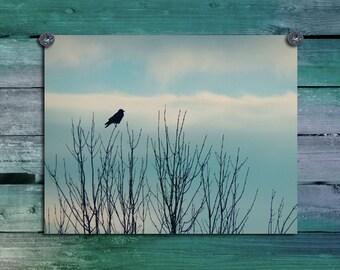 Perched Blackbird, Nature Wall Decor, Raven, Crow Photograph, Clouds, Sky, Bird Art, Avian, Treetops, Corvidae - Subtle Soft Sky