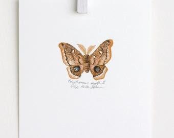 Moth Illustration, Moth art, Moth print