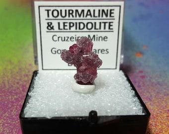 Rare TOURMALINE And LEPIDOLITE Rubellite Pink Tourmaline Purple Lepidolite Terminated Crystal Cluster In Perky Box Cruzeiro Mine NEW