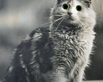 Antique glass eyes cat photo postcard, cat with glass eyes, novelty postcard, antique cat photo postcard, Real eyes postcard