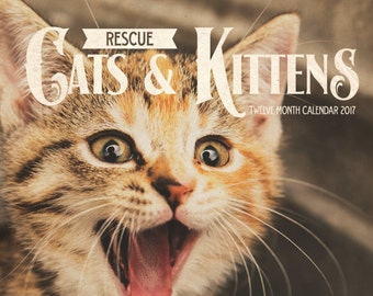 2017 Cat & Kitten Calendar