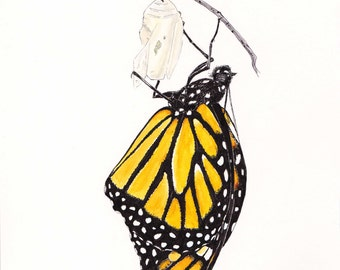 Monarch Butterfly Print, Pen and Ink and Watercolor, animal,wildlife,nature,butterfly painting,chrysalis,butterfly collector, pen and ink