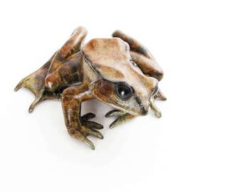 Common frog looking left No.7/100 Limited edition bronze