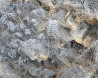 Silver Coopworth Natural Wool Fleece (203) - 6.7 lbs