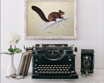Botanical Squirrel Print, Squirrel Art Print, Squirrel Illustration, Vintage Botanical Print, Decorative Reproduction, Squirrel Print A004