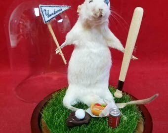 Taxidermy Mouse Yankees Fan