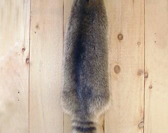 Adirondack Raccoon Pelt, tanned fur pelt