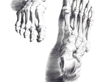 Book Plate of Albinus Anatomy. The Bones of the Foot #1. 1972