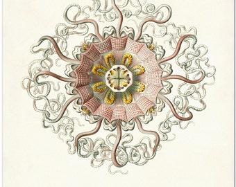 Cranberry Jellyfish Print, Jellyfish Art,  Poster, Ernst Haeckel Illustration, Coastal Decor, Coastal Wall Art, Beach Art, Beach House Art