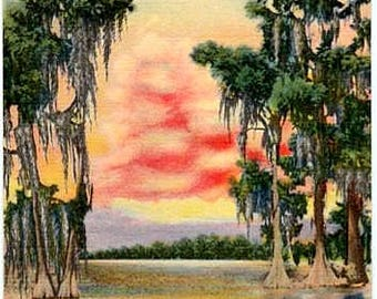 Vintage Old South Postcard - Sunset on a Southern Lake (Unused
