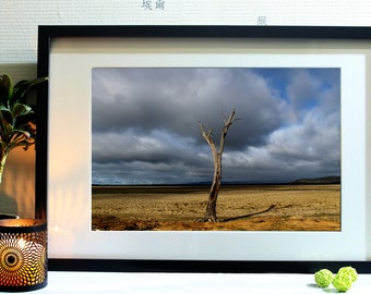 Photograph of a tree isolated in Australia