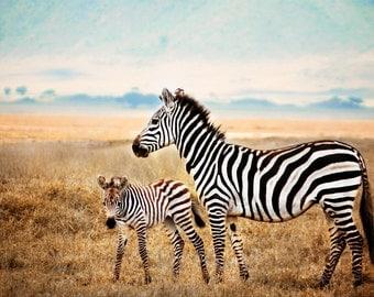 Zebras on the Ngorogoro Crater