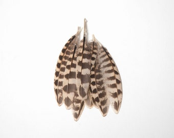 Natural Female Pheasant Quill Wing Feathers - Brown Striped - Small  UK Seller - Great for crafts, jewellery + dream catcher making!