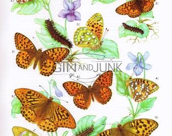 Vibrant Vintage 1970s Butterfly Print