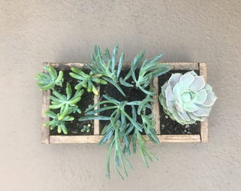 Succulent Planter Box for Patio, Counter Top, or Small Spaces