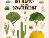 Plants of the Southwest Poster