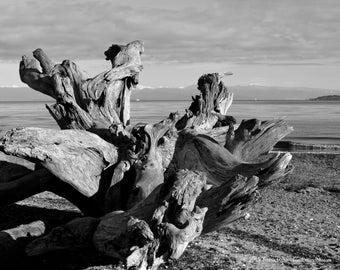 Rathtrevor Beach, Parksville BC Canada 1735