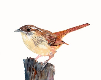 Carolina Wren Watercolor Print, State Bird Art, Painting by Kenley Jones