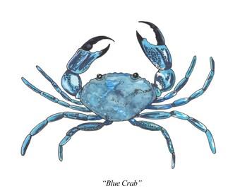 Blue Crab Watercolor Print, from an Original Watercolor Painting by Kenley Jones