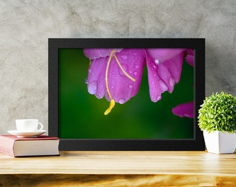 Printable Wall Art, Pink Flower Photography, Peony Photograph, Home Decor, Flower Poster, Art Download