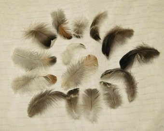 Assorted Small Feathers, Humane Craft Feathers, Cruelty Free Feathers, Feathers for Crafts, Feathers for Hair, Feathers for Jewelry