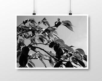 Tree print, printable art, wall art print, modern print, minimal, photography leaves, black and white photography, digital download