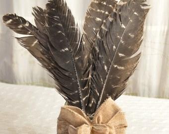 Turkey Feathers - set of 6