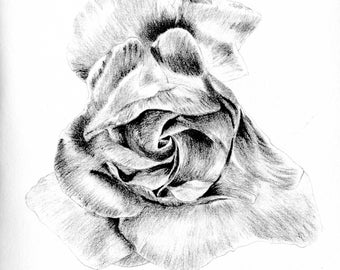 Greeting Card - Rose I