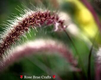 Grasses, Sunshine Coast, BC, Nature Photography