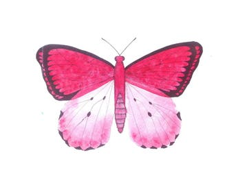 Electric Pink Butterfly