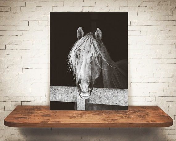 Horse Photograph - Fine Art Print - Black & White Photography - Equine Wall Art - Wall Decor -  Horse Pictures - Farm House Decor - Horses