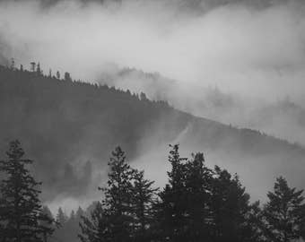Foggy Redwood Forests; Trees Covering Mountains; Nature; Fine Art Photo Print