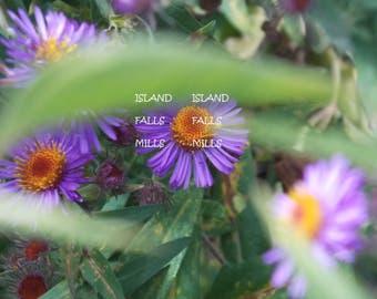 Flower in Hiding digital download
