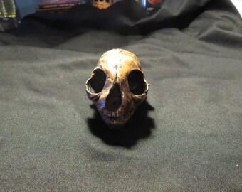 Cat Skull // Animal Skull // Taxidermia // Skull// Gato // Cráneo de Gato