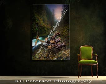 Misty Creek With  Fallen Log & Gigantic Stump.....FREE SHIPPING!
