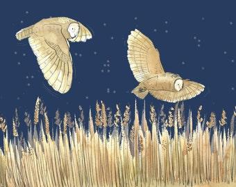 Greetings Card - Owls