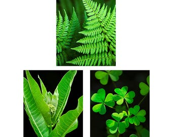 Botanical Prints Set, Fine Art Photography Wall Art Set, Nature Photo Prints, Set of 3 Prints, Vertical Wall Art, Green Plant Pictures
