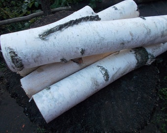 Birch log, Craft Supplies, Birch Logs, White Birch Logs, Birch Wood