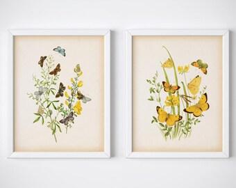 Butterfly print set download, Entomology art, Vintage insect illustration, Butterfly printable art, Set of prints, Digital download print