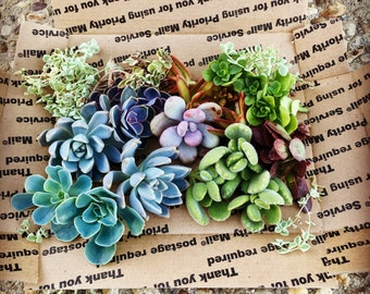 Succulent Goodie Bag
